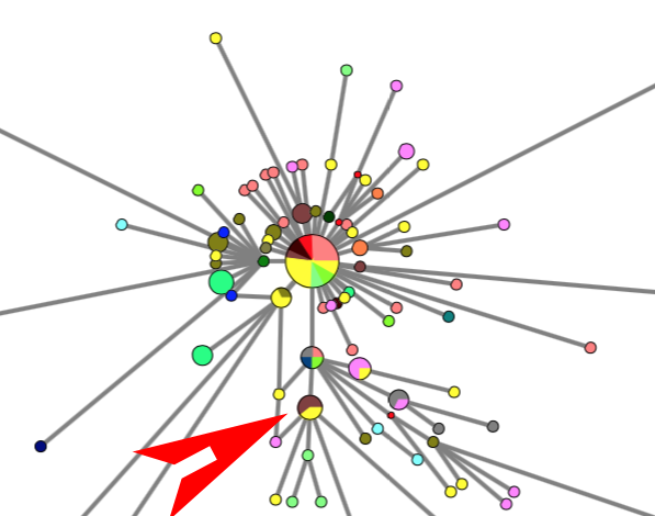 PHYLOGENETIC NETWORK OF CORONA VIRUS CoVID-19 OUTBREAK ON 29 Feb 2020